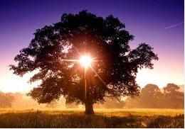 waarden boom met zon